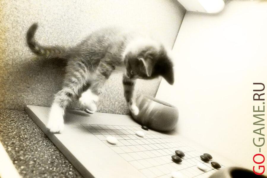 Даже котята играют в Го!